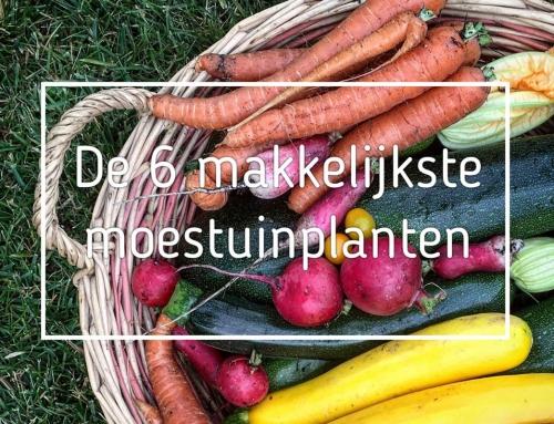 De 6 makkelijkste moestuin planten