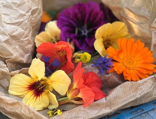 Foodtrend: eetbare bloemen in alle kleuren